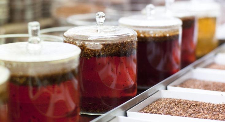 rooibos fermentation