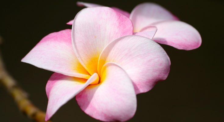 Fleur Hawaii Zen